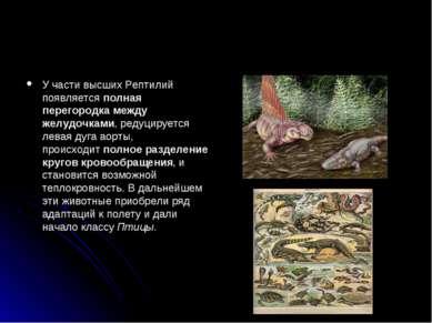 У части высших Рептилий появляетсяполная перегородка между желудочками, реду...