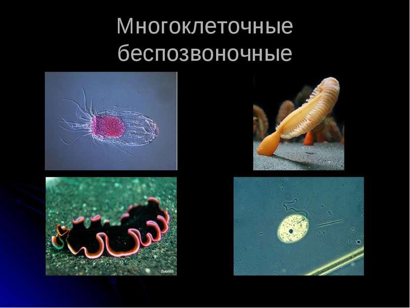 Многоклеточные беспозвоночные