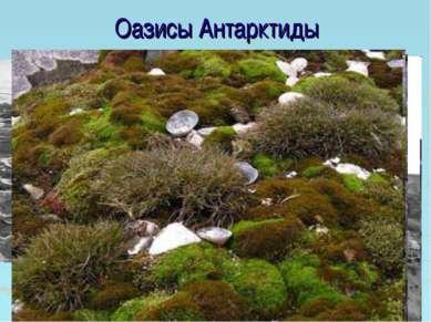 Оазисы Антарктиды