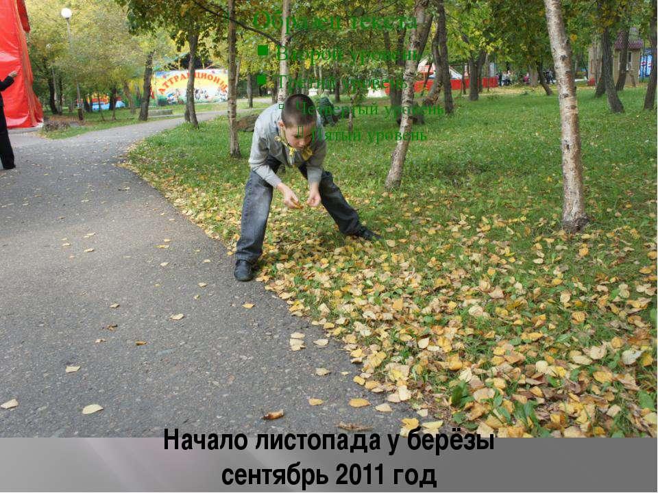 Начало листопада у берёзы сентябрь 2011 год