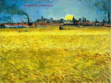 morning fields of amber grain
