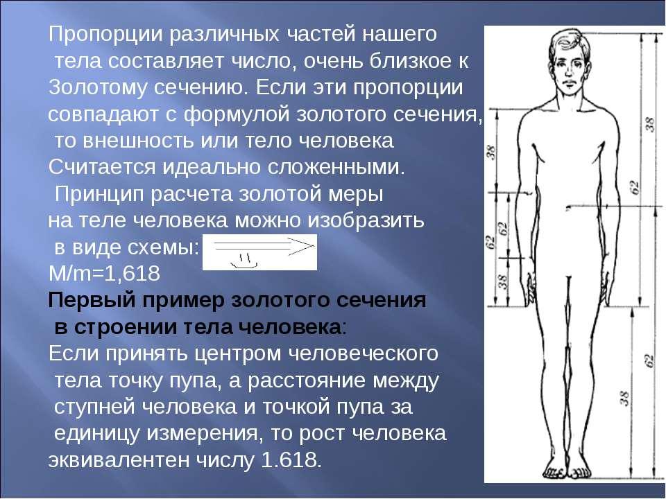 Пропорции различных частей нашего тела составляет число, очень близкое к Золо...