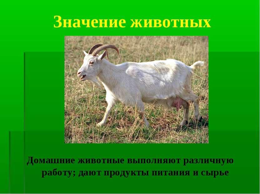 Значение животных Домашние животные выполняют различную работу; дают продукты...