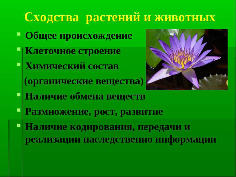 Сходства растений и животных Общее происхождение Клеточное строение Химически...