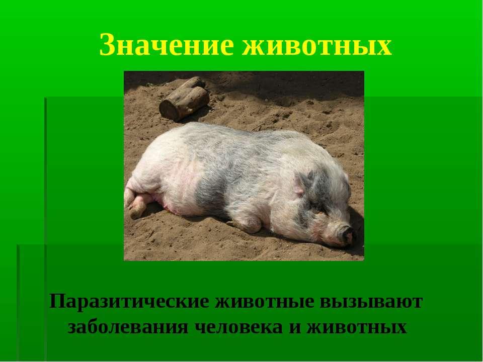 Значение животных Паразитические животные вызывают заболевания человека и жив...