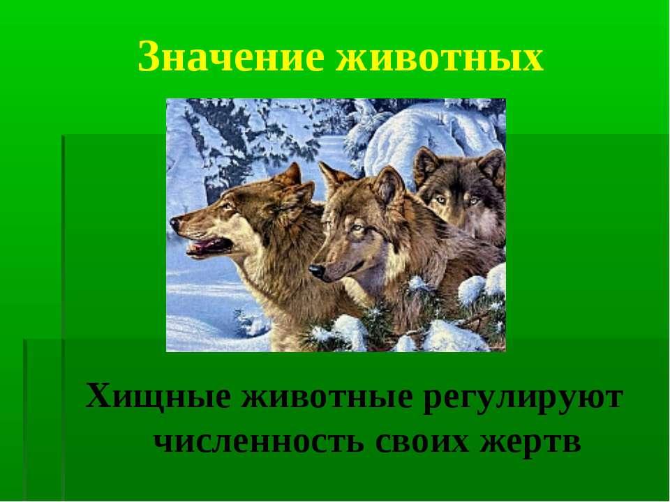 Значение животных Хищные животные регулируют численность своих жертв