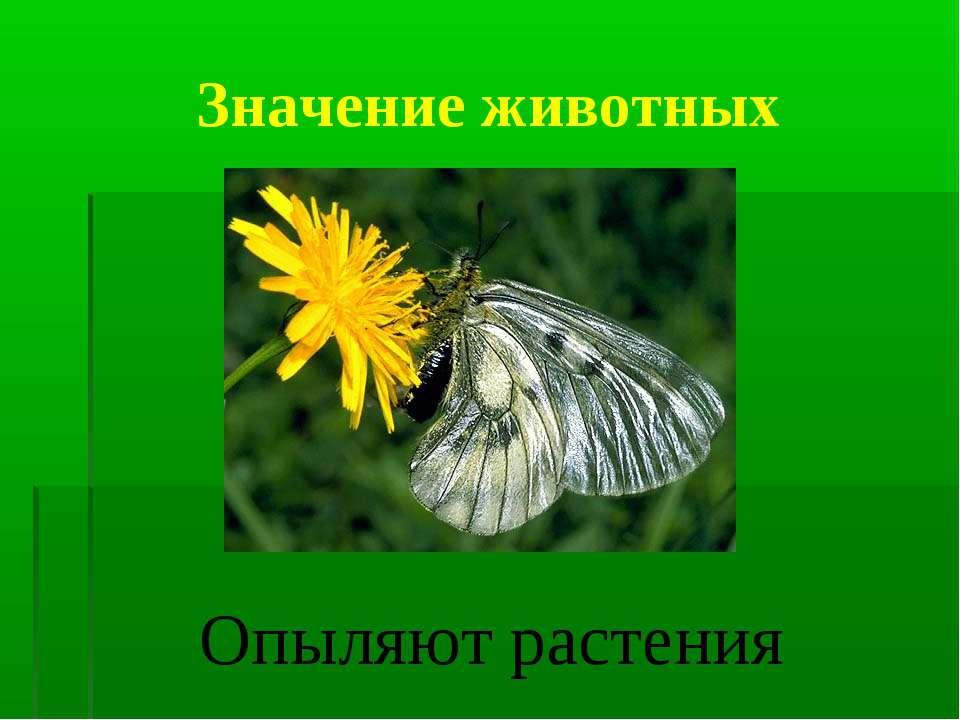 Значение животных Опыляют растения