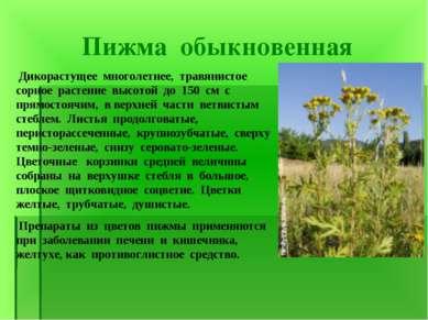 Пижма обыкновенная Дикорастущее многолетнее, травянистое сорное растение высо...