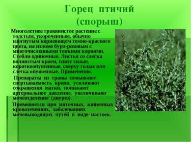 Горец птичий (спорыш) Многолетнее травянистое растение с толстым, укороченным...