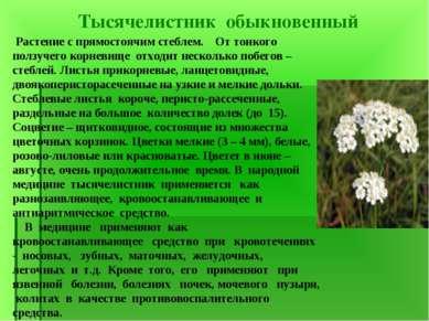 Тысячелистник обыкновенный Растение с прямостоячим стеблем. От тонкого ползуч...