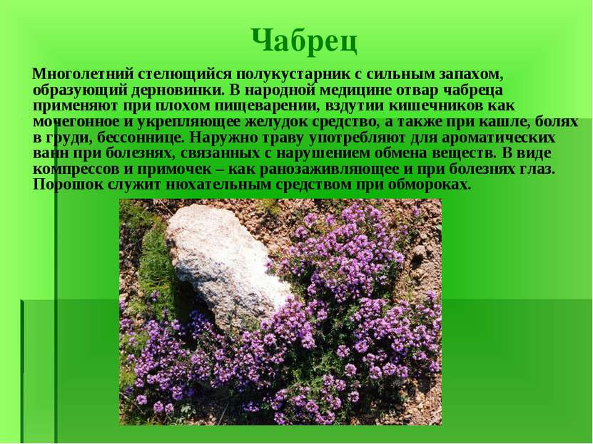 фото лекарственных растений и их названия