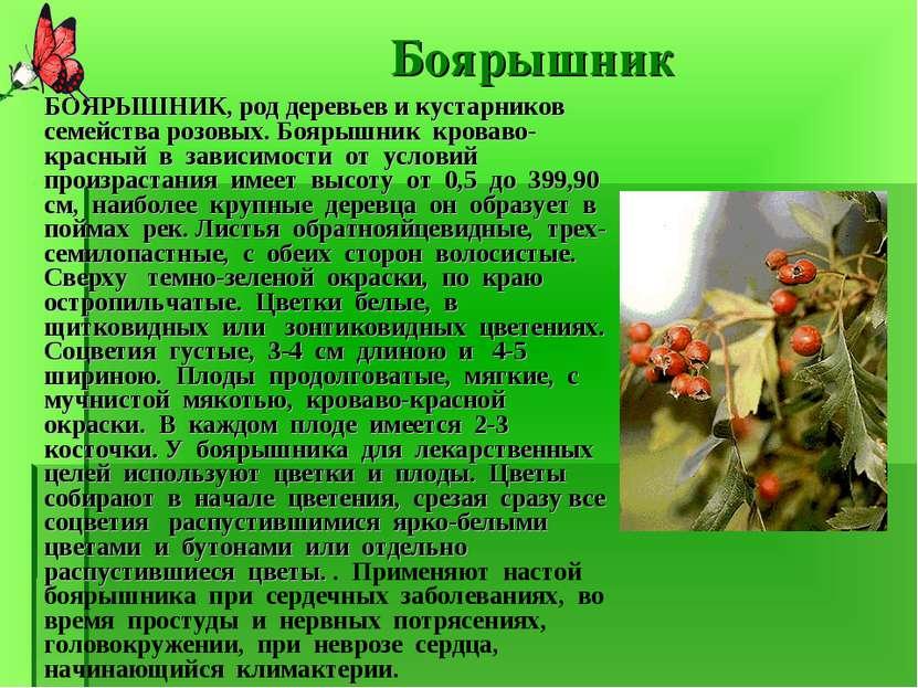 Боярышник БОЯРЫШНИК, род деревьев и кустарников семейства розовых. Боярышник ...