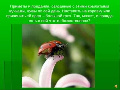 Приметы и предания, связанные с этими крылатыми жучками, живы по сей день. На...
