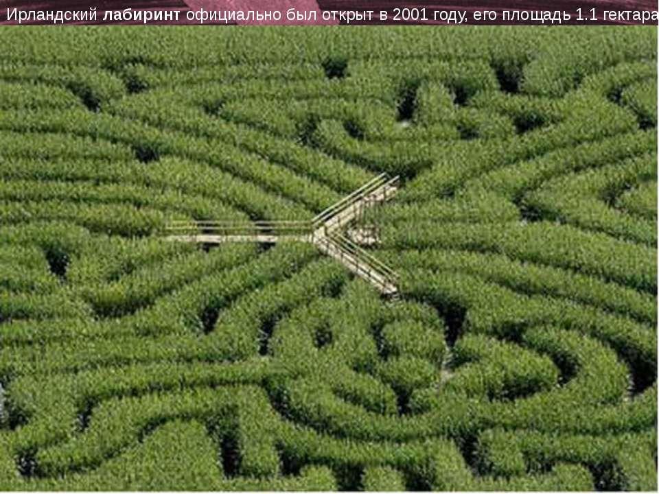 http://www.deti-66.ru/ «Детский исследовательский проект» Пол-лабиринт с 'роз...
