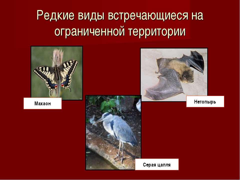 Редкие виды встречающиеся на ограниченной территории Махаон Серая цапля Нетопырь