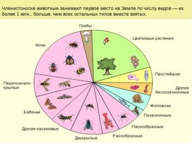 Общая характеристика типа Членистоногие (Arthropoda) Членистоногие животные з...
