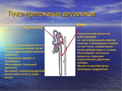 Точки приложения диуретиков Фуросемид Манит Угнетает реабсорбцию Na и Cl в во...