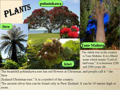 pohutukawa fern Tane Mahuta kiwi The beautiful pohutukawa tree has red flower...