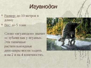 Игуанодон Размер: до 10 метров в длину Вес: до 5 тонн Слово «игуанодон» значи...