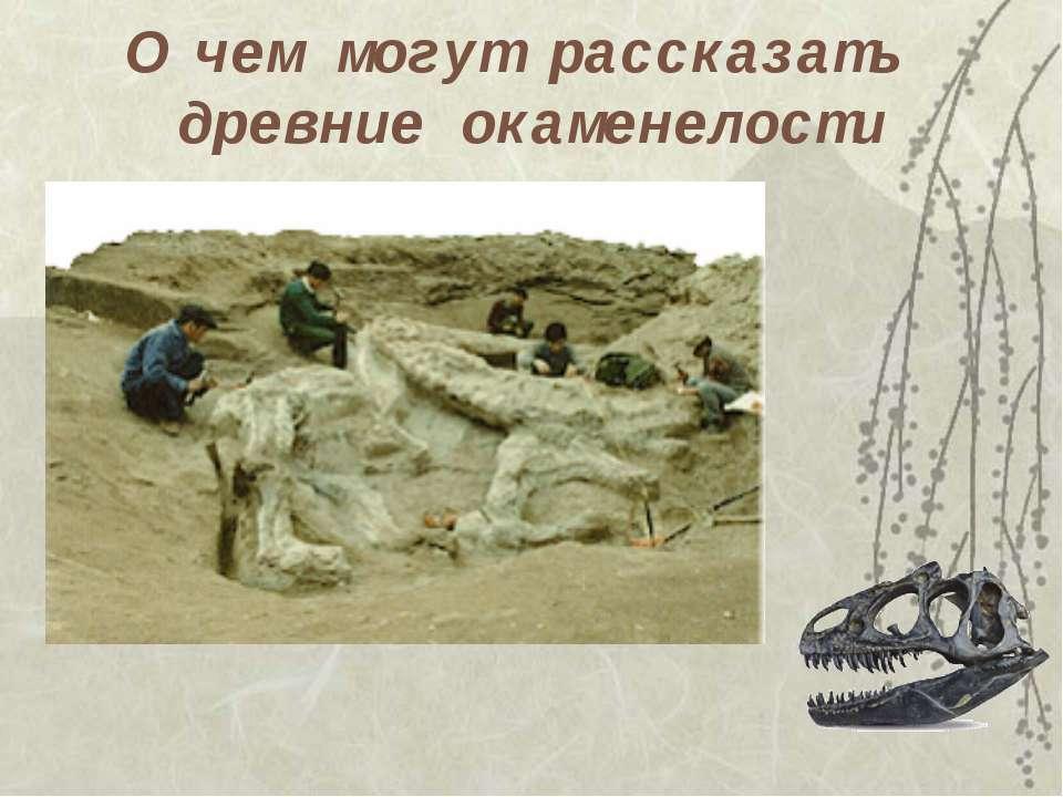О чем могут рассказать древние окаменелости