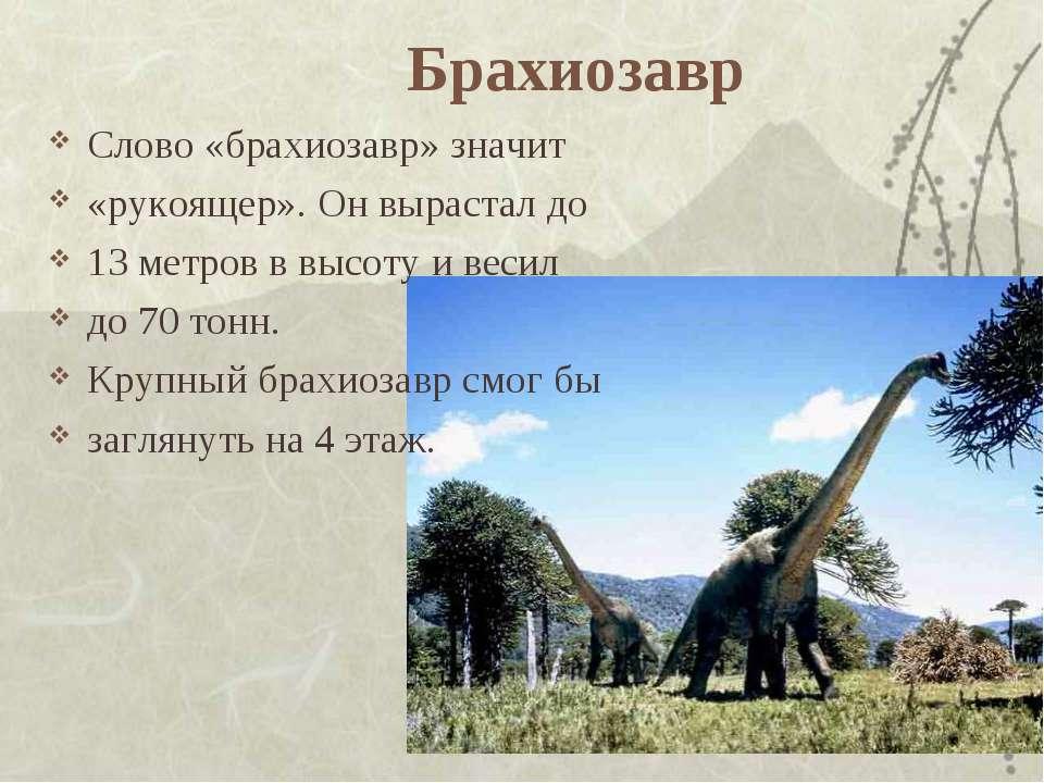 Брахиозавр Слово «брахиозавр» значит «рукоящер». Он вырастал до 13 метров в в...