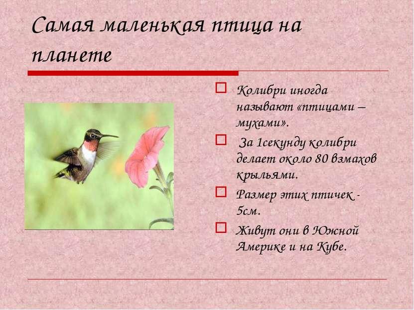 Самая маленькая птица на планете Колибри иногда называют «птицами – мухами». ...