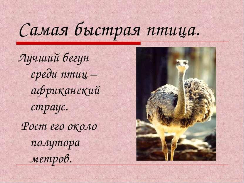 Самая быстрая птица. Лучший бегун среди птиц – африканский страус. Рост его о...