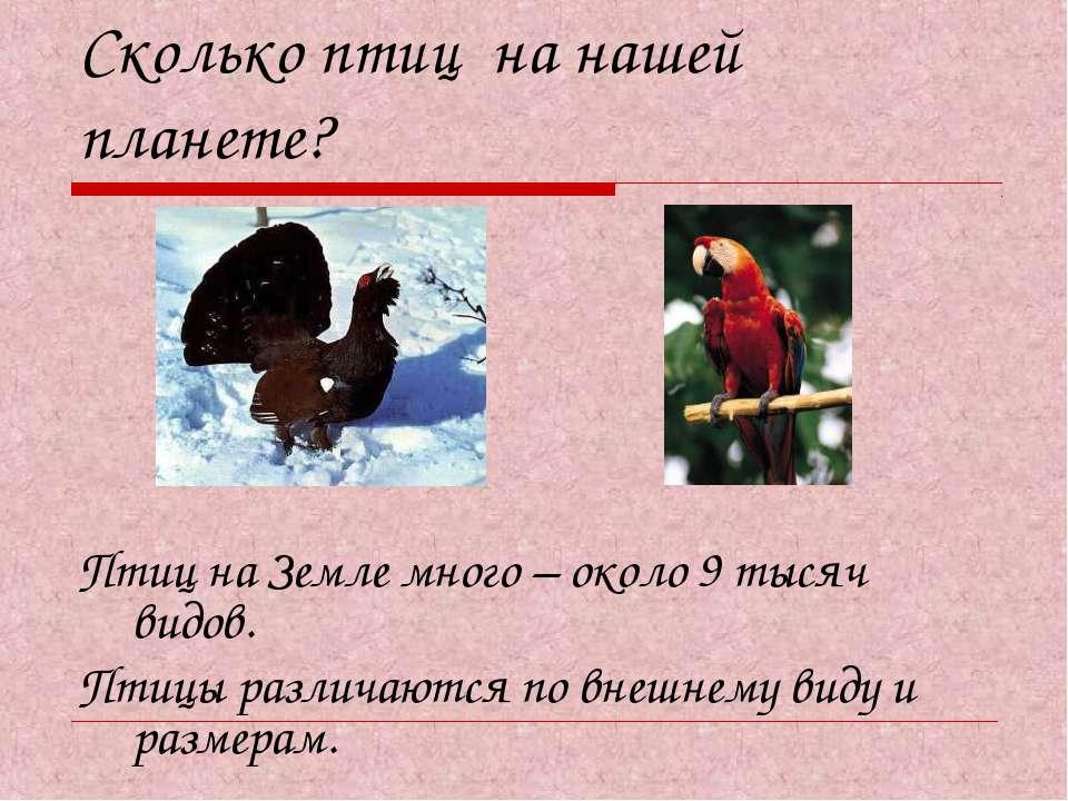 Сколько птиц на нашей планете? Птиц на Земле много – около 9 тысяч видов. Пти...