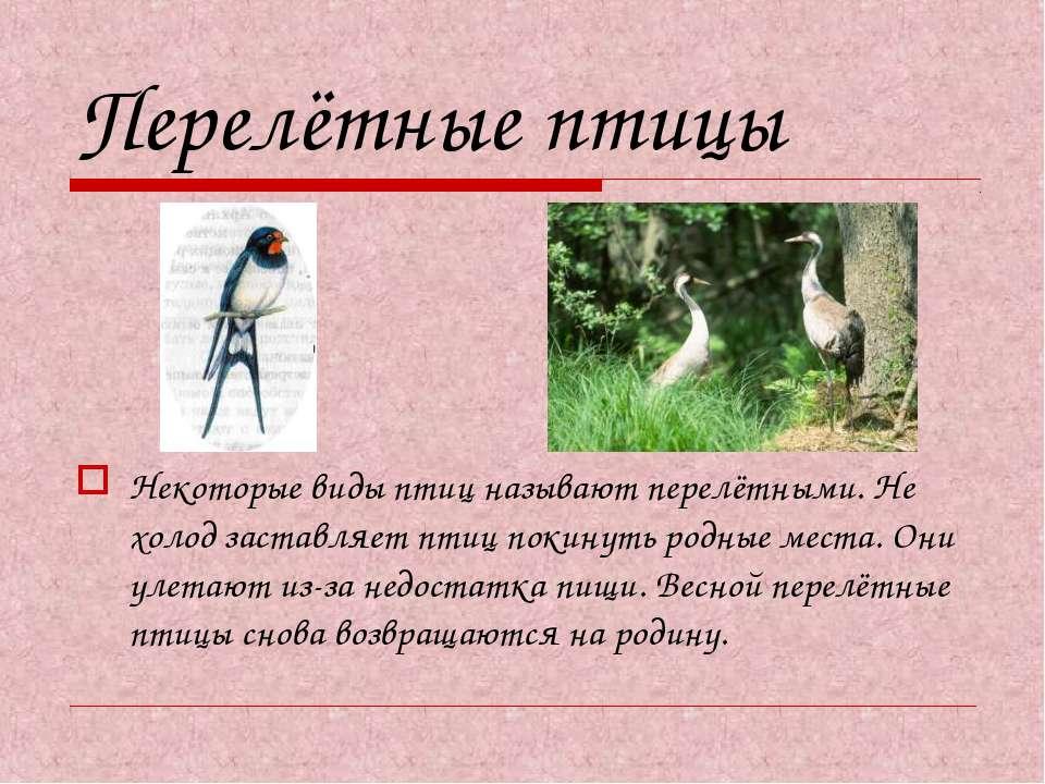 Перелётные птицы Некоторые виды птиц называют перелётными. Не холод заставляе...