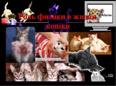 Роль физики в жизни кошки