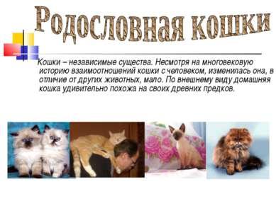 Кошки – независимые существа. Несмотря на многовековую историю взаимоотношени...