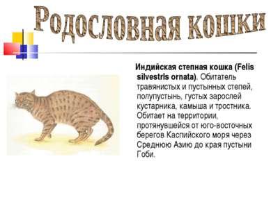 Индийская степная кошка (Felis silvestrls ornata). Обитатель травянистых и пу...
