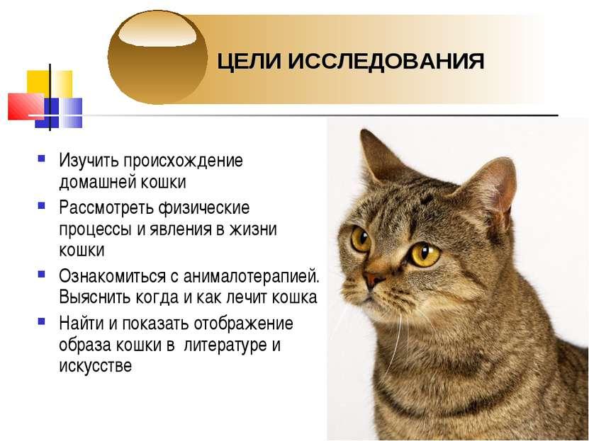 Изучить происхождение домашней кошки Рассмотреть физические процессы и явлени...