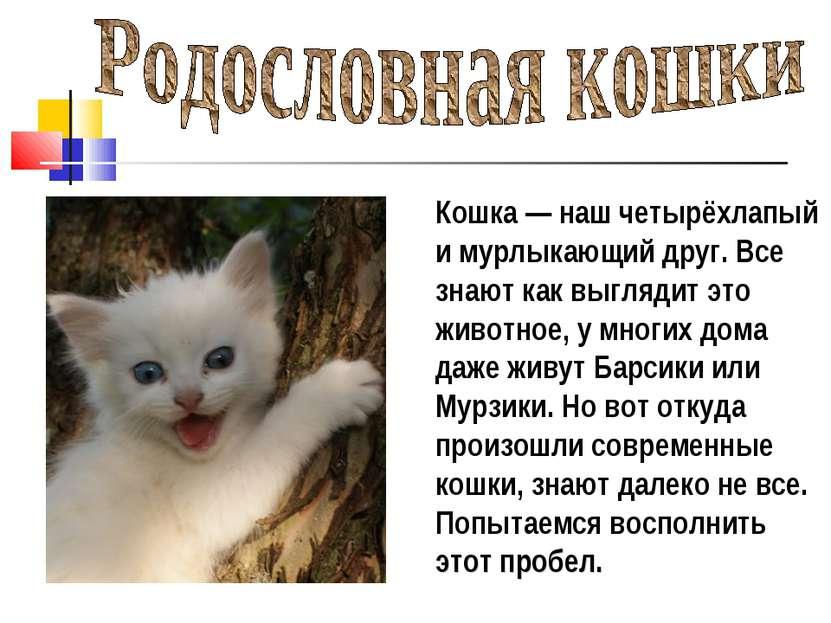 Кошка— наш четырёхлапый и мурлыкающий друг. Все знают как выглядит это живот...
