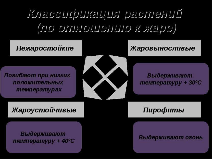 Классификация растений (по отношению к жаре) Нежаростойкие Жаровыносливые Жар...