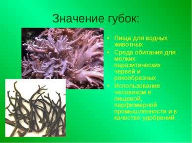 Значение губок: Пища для водных животных Среда обитания для мелких паразитиче...