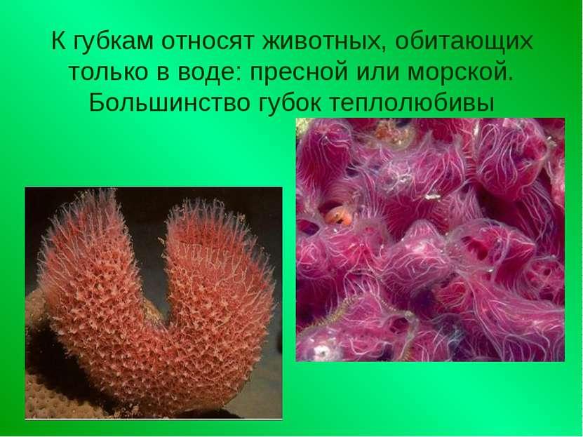 К губкам относят животных, обитающих только в воде: пресной или морской. Боль...
