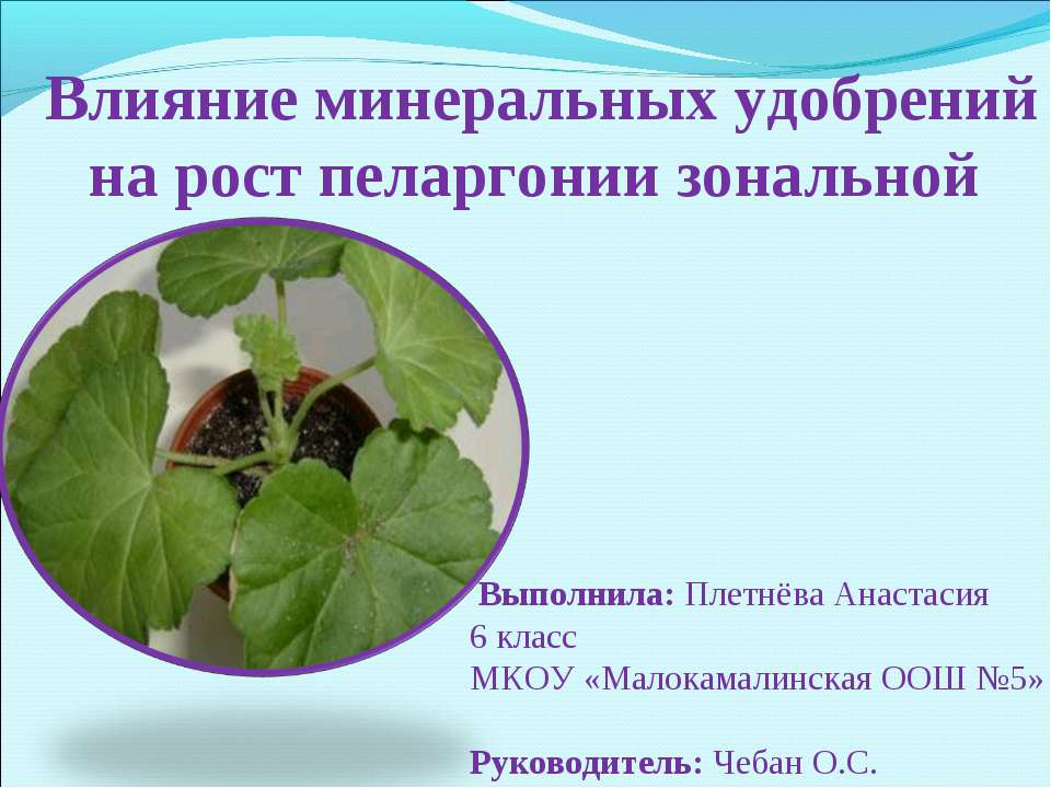 Влияние минеральных удобрений на рост пеларгонии зональной Выполнила: Плетнёв...