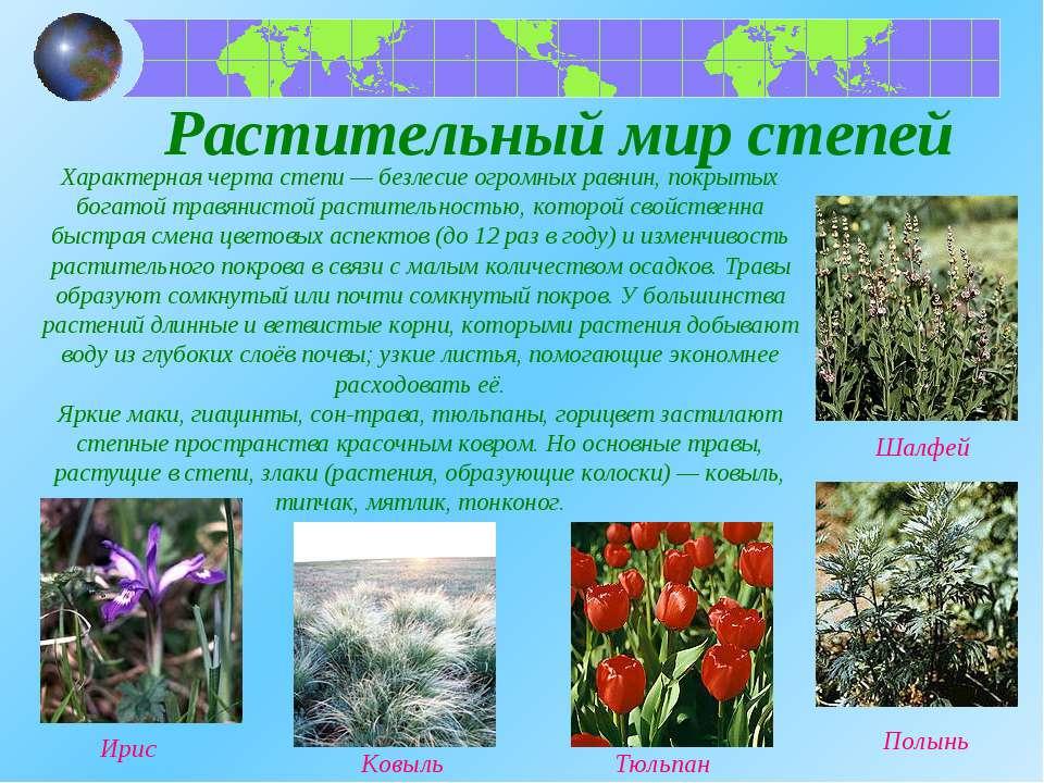 Растительный мир степей Характерная черта степи — безлесие огромных равнин, п...