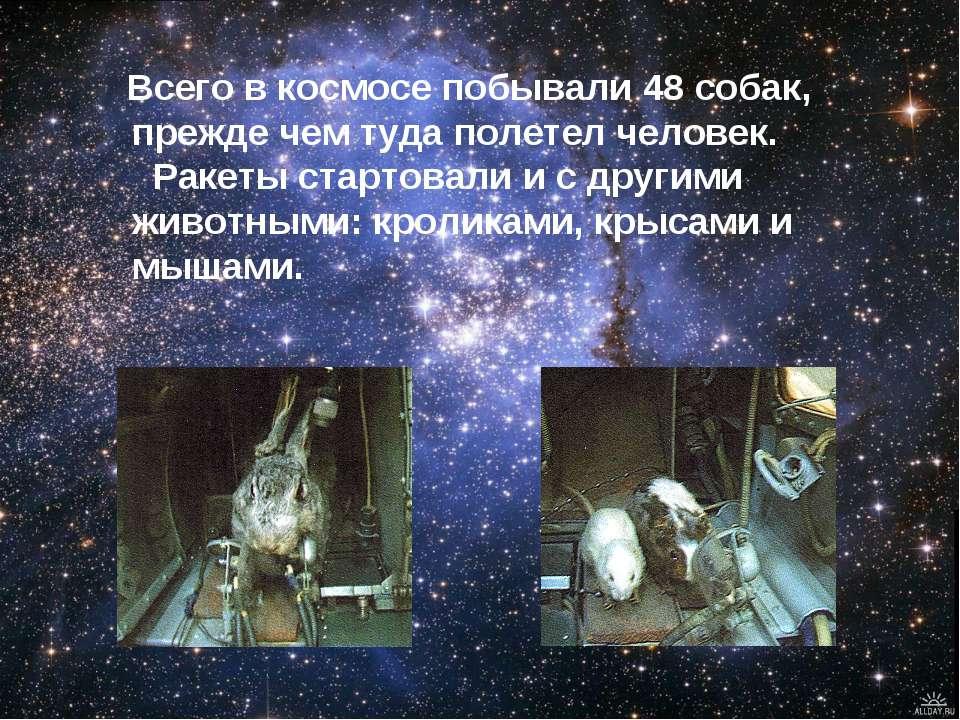 Всего в космосе побывали 48 собак, прежде чем туда полетел человек. Ракеты ст...