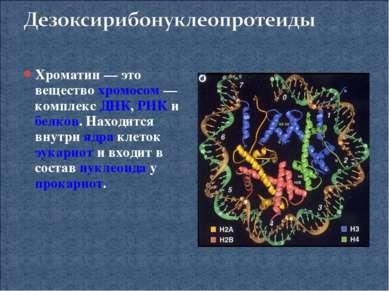 Хроматин— это вещество хромосом— комплекс ДНК, РНК и белков. Находится внут...