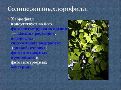 Хлорофилл присутствует во всех фотосинтезирующих организмах— высших растения...