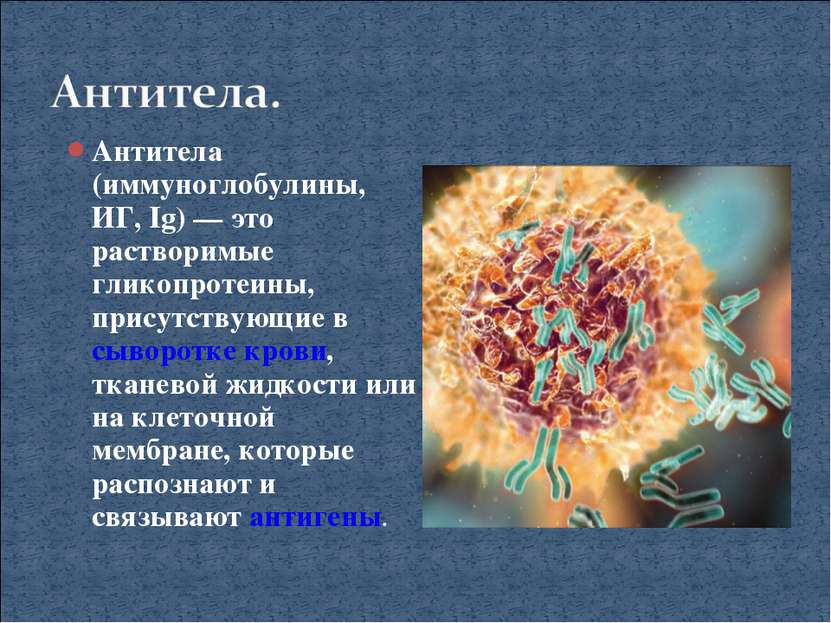 Антитела (иммуноглобулины, ИГ, Ig)— это растворимые гликопротеины, присутств...