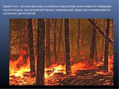 Кроме того, лесные массивы в огромных масштабах уничтожаются пожарами, после ...