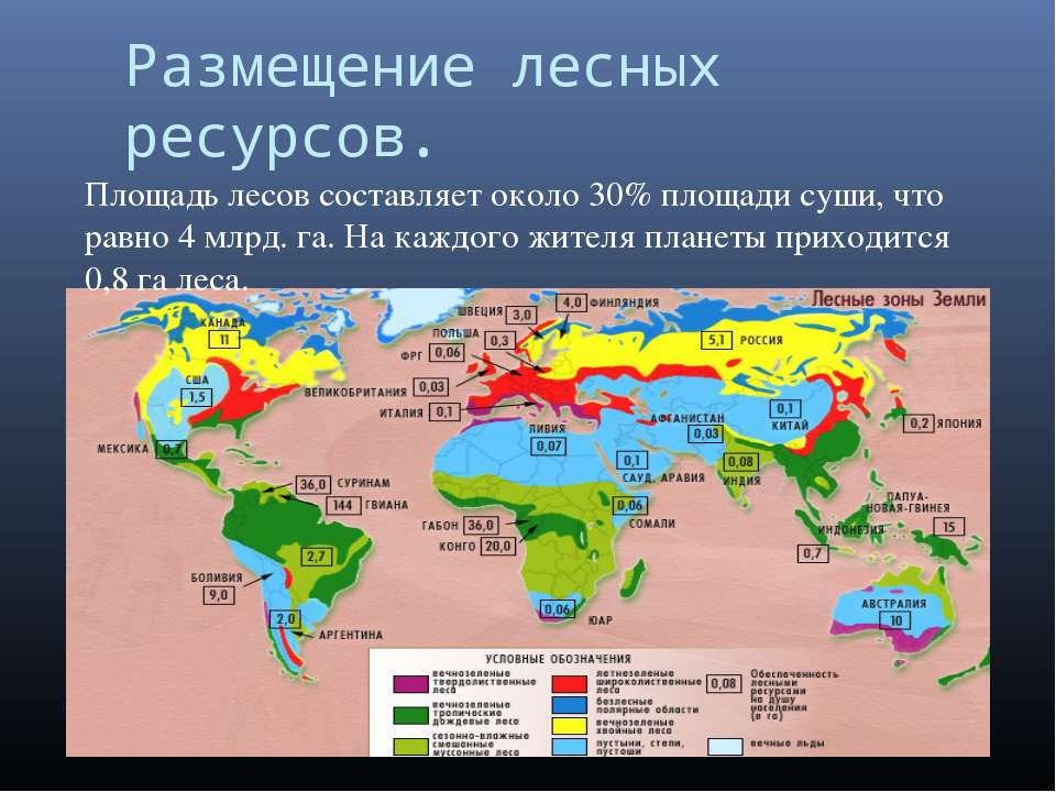 Размещение лесных ресурсов. Площадь лесов составляет около 30% площади суши, ...