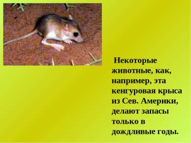 Некоторые животные, как, например, эта кенгуровая крыса из Сев. Америки, дела...