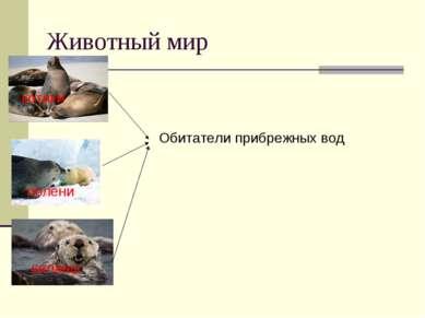 Животный мир котики тюлени каланы Обитатели прибрежных вод