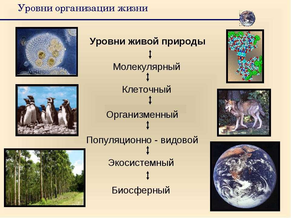 Уровни организации жизни Уровни живой природы Клеточный Организменный Популяц...