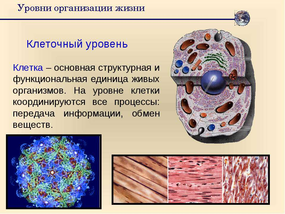 Уровни организации жизни Клеточный уровень Клетка – основная структурная и фу...