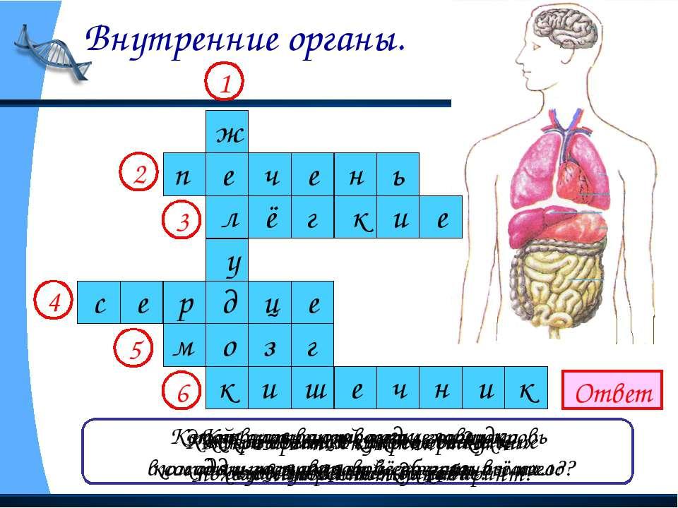 Внутренние органы. Ответ Как называется главное отделение «внутренней кухни»?...